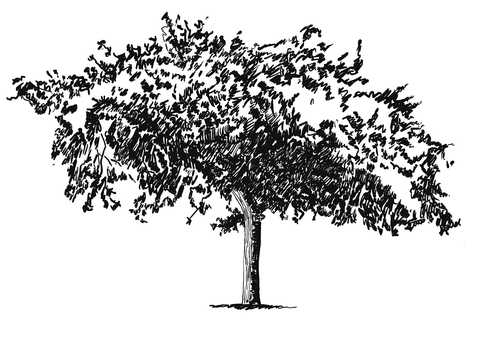 smaller tree