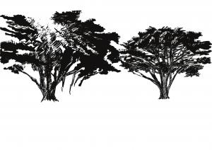 Trees in Torquay